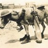 2 World War: Most Humorous Pictures