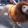 Most Funny Pictures: One Day As A Lion