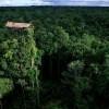 The Tree Houses of the Korowai Tribe of New Guinea