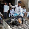 Indian abattoirs end strike on assurances of no Hindu party crackdown