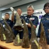 Malaysia seizes big shipment of rhino horns at airport
