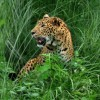 Leopard shuts down Nepal airport