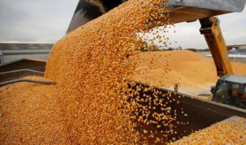 In threat to food security, Bangladesh moves to burn grain for fuel