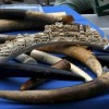China ban on ivory sales begins Sunday, aims to curb elephant poaching