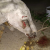 "This poor donkey was ""beat to a pulp"" and tortured at the hands of political supporters"