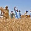 Fatima Fertilizer's profits rise 7% to Rs2.77 billion