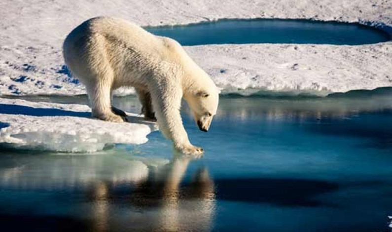 Arctic's record warming driving 'broad change' in environment: study