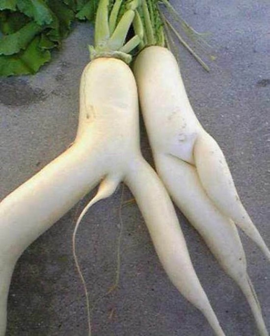 Does This Pair of Radish Looks Suggestive