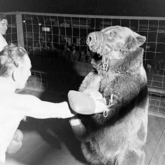 Bear Vs Man