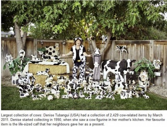 Largest collection of Cows