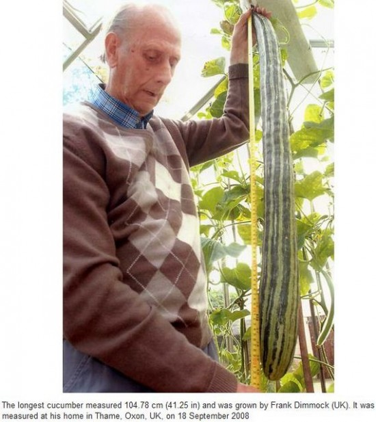 Longest cucumber