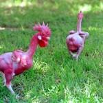Featherless Chicken