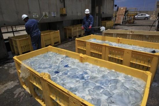 Millions of Jellyfish