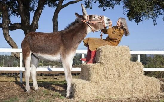tallest donkey