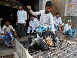 Cow crackdown puts India's meat industry on edge