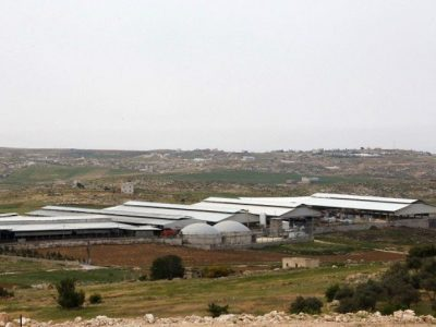 A picture taken on April 10, 2017 shows a general view of the Jebrini dairy farm in the West Bank town of Hebron, where cow dung is used to produce electricity as an alternative power source. PHOTO: AFP