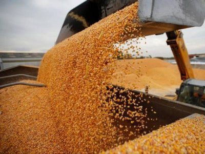 Bangladesh today produces about 1.8 million tonnes of broken rice, about 100,000 tonnes of molasses and less than half the 6 million tonnes of maize it needs each year, according to the country's Energy Ministry. PHOTO: REUTERS