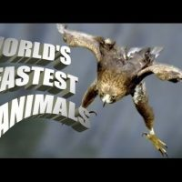 TOP, 5, FASTEST ,ANIMALS, ON, EARTH, FASTEST, ANIMALS