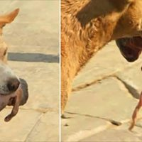 Hungry Dog Grabbed A Newborn And Did Something Amazing