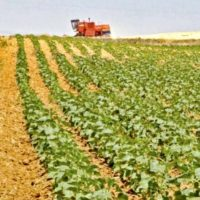 Stakeholders express reservations over Punjab's agriculture policy draft